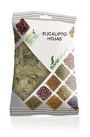EUCALIPTUS FULLES BOSSA Soria Natural