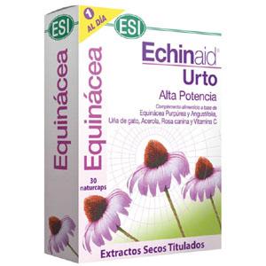 Echinaid Urto